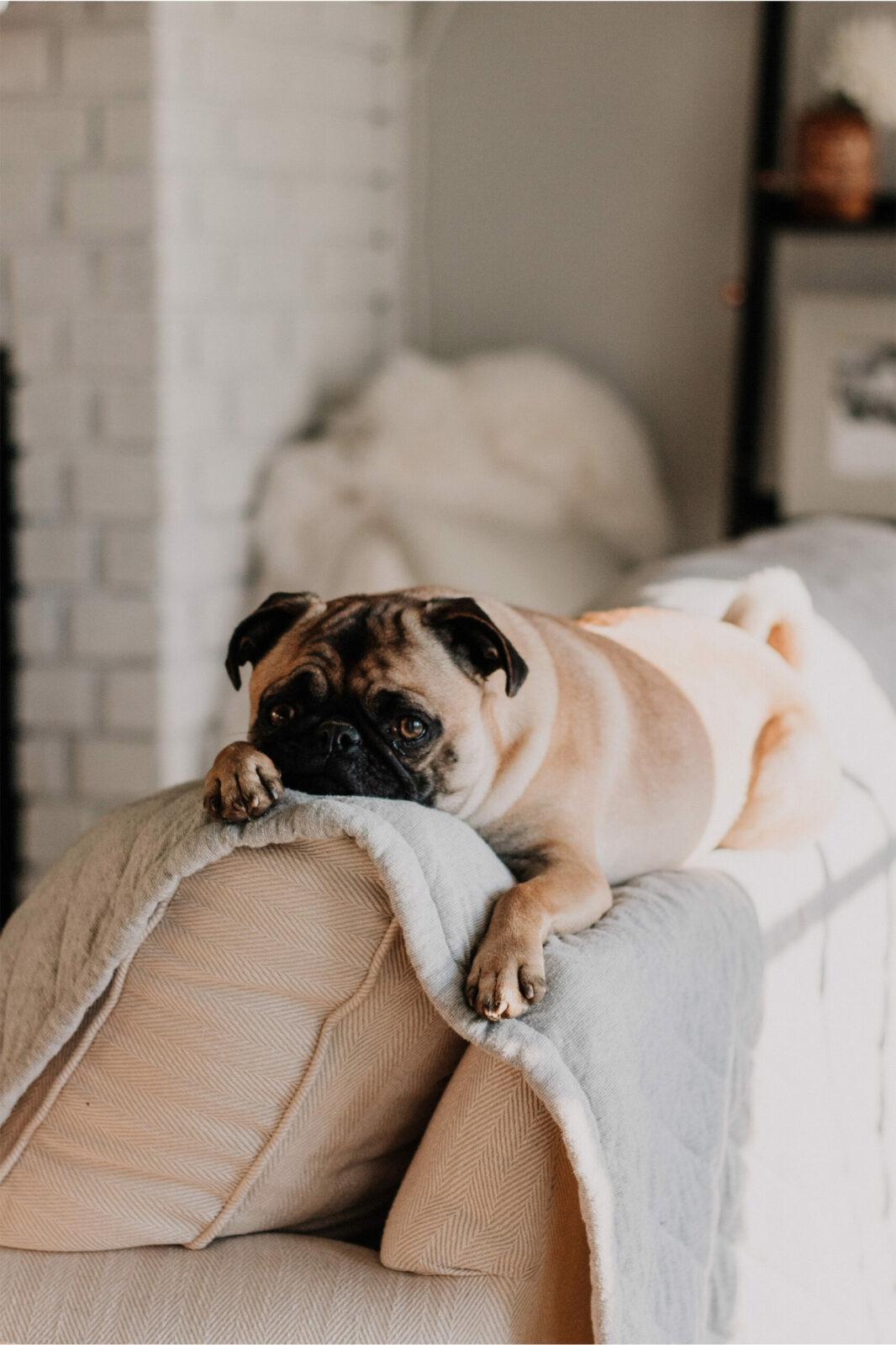 TPLO-surgery-dogwood-veterinary-charlotte-nc