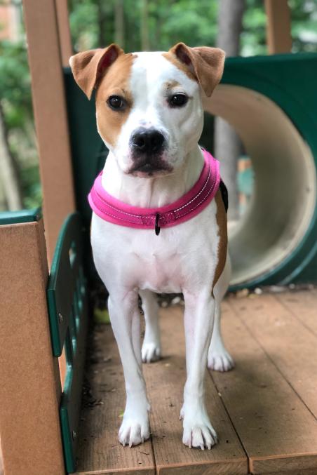 dogwood-veterinary-surgical-care-charlotte-nc