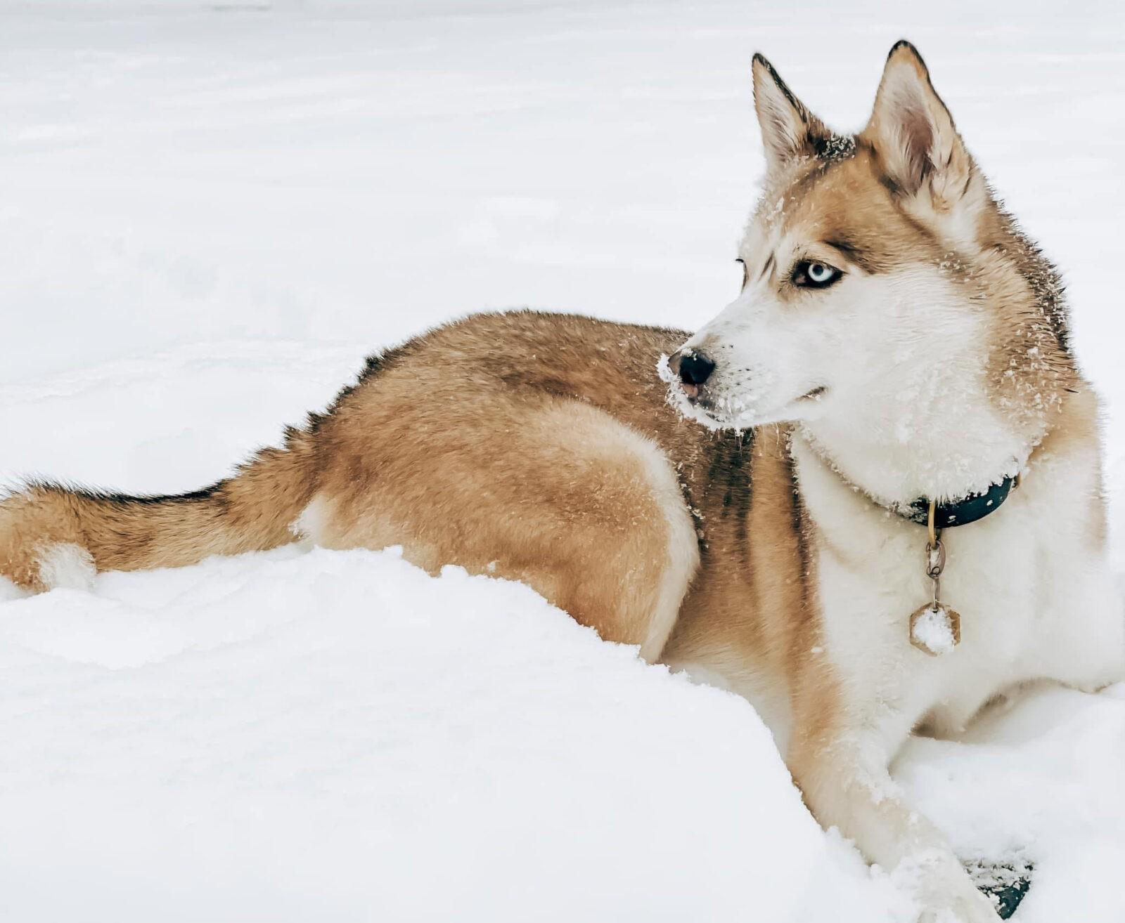orthopedic-surgeries-dogwood-veterinary-clinic
